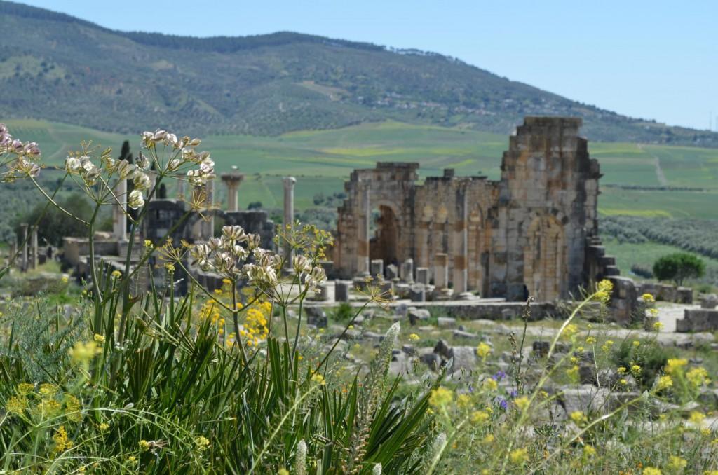 Sonne satt: Im Frühjahr blühen in Marokko die Wildblumen.