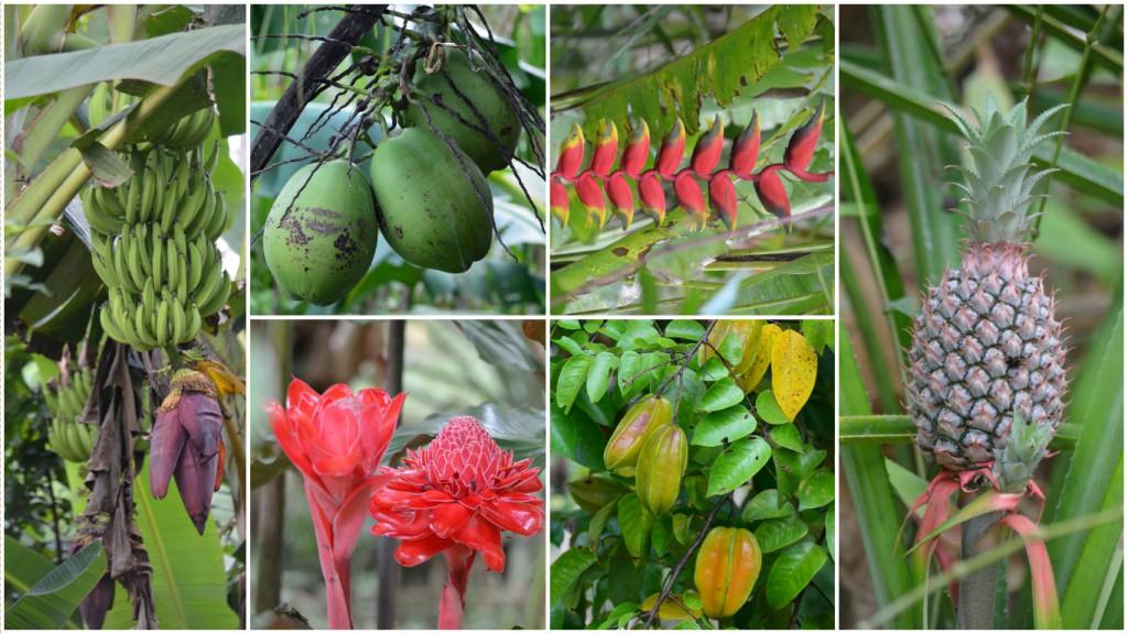 Ein Paradies für Naturfans: Tambopata Nationalpark in all seinen Farben