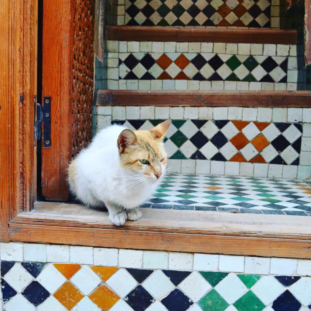 Auf samtigen Pfoten durch Marokko