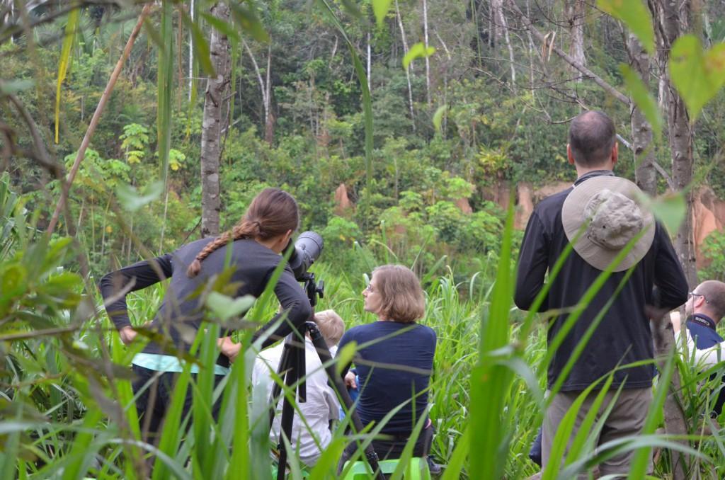 Tambopata Nationalpark Peru: Auf der Suche nach den großen Aras