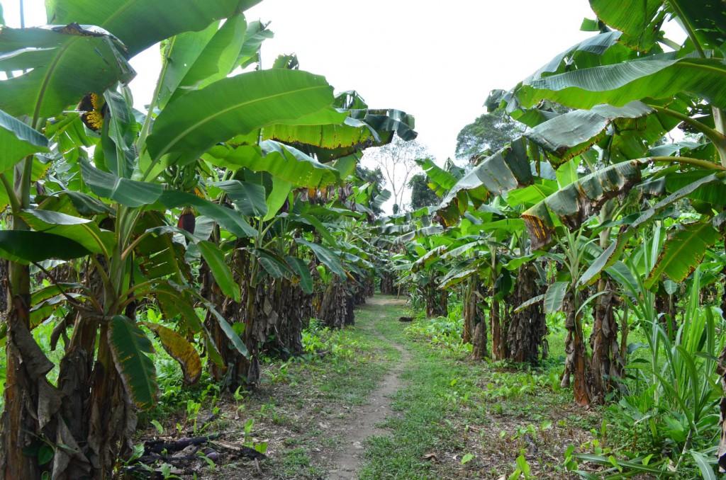 Zähneputzen zwischen Bananenstauden: Das Leben könnte schlimmer sein!