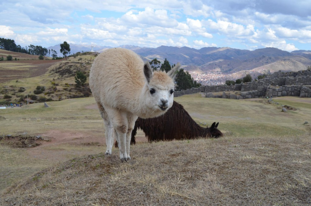 Backpacking in Peru: Per Du mit Lamas und Alpacas!