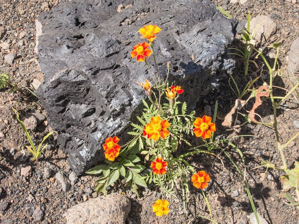 Vulkanwandern auf den Kapverden