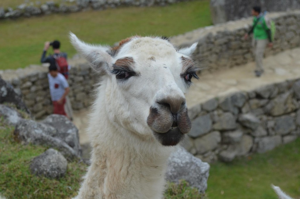 Peru Packliste für Backpacker
