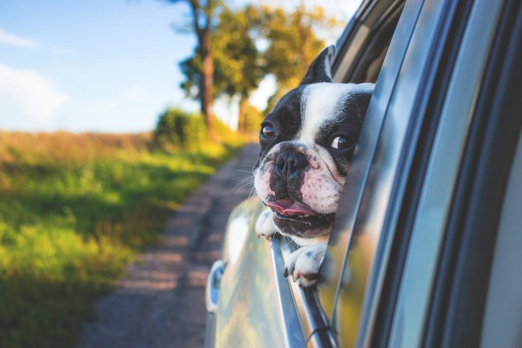 Weltreise mit Hund: Der eigene PKW ist das beste Transportmittel.