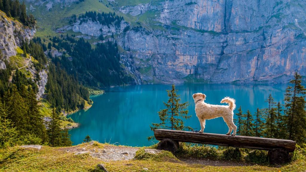 Nicht ohne meinen Vierbeiner: So organisierst du eine Weltreise mit Hund!