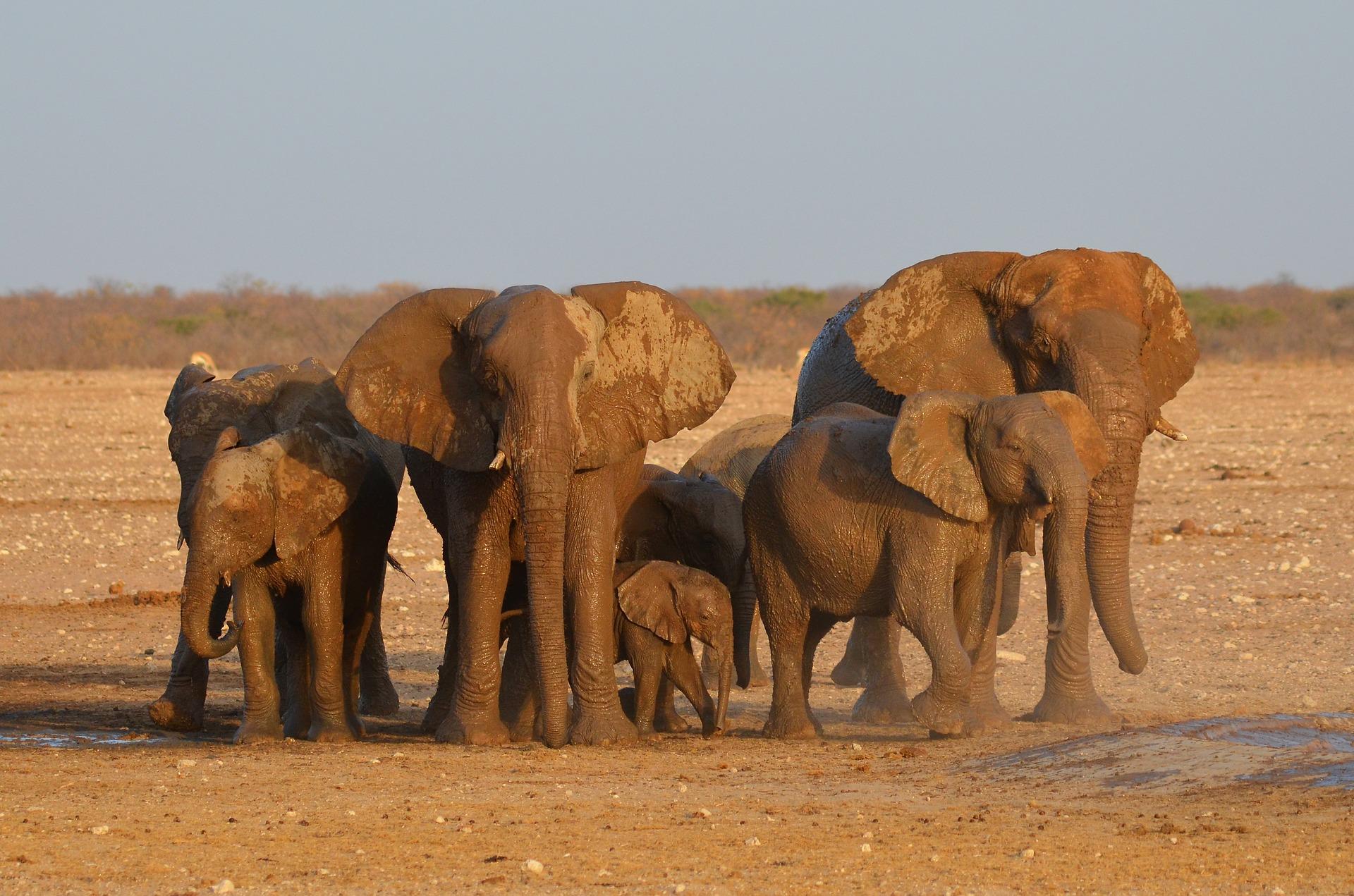 Namibia Selbstfahrer Safari: Respektiere die Tiere und halte Abstand!