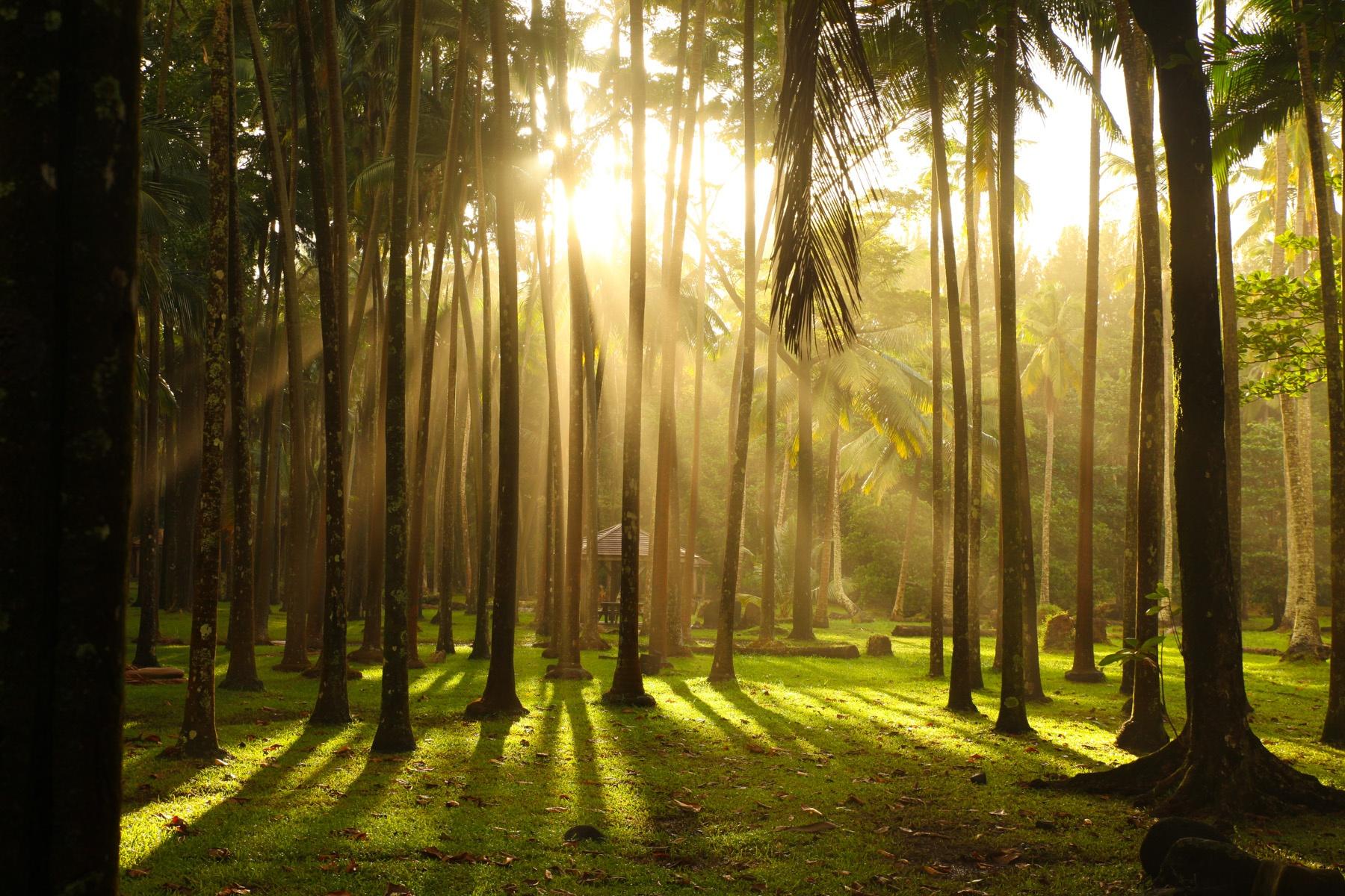Ein typischer Morgen unter den Palmen von La Réunion: Daran kann man sich gewöhnen!