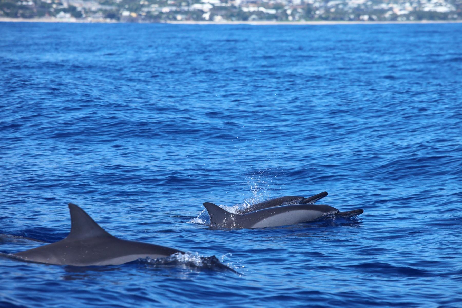 La Réunion Highlights: Delfine und Wale beobachten