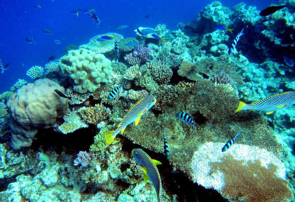 Reisetipps Australien: Tauchen im Great Barrier Reef