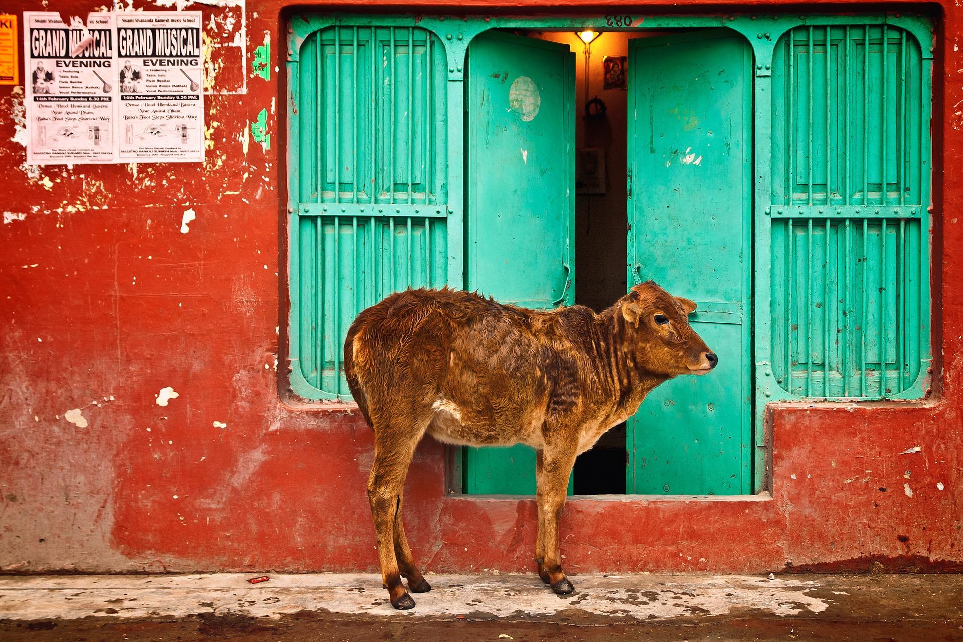 Erfrischend anders: Eine Indien Rundreise wirst du niemals vergessen!