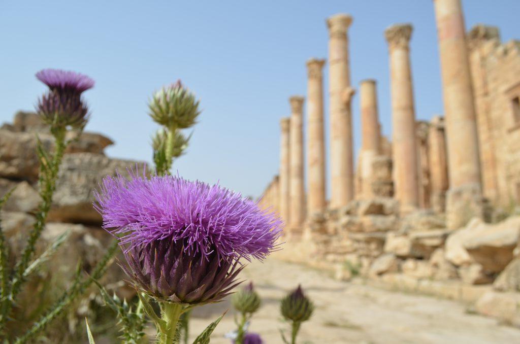 Roadtrip durch Jordanien: Im Frühling und Frühsommer blüht das ganze Land.
