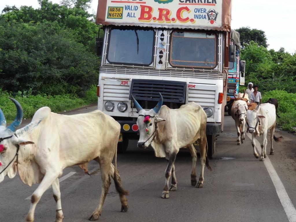 Straßenverkehr in Indien: Da trifft Mensch auf Moped, und LKW auf Kuh. Nichts für Anfänger!