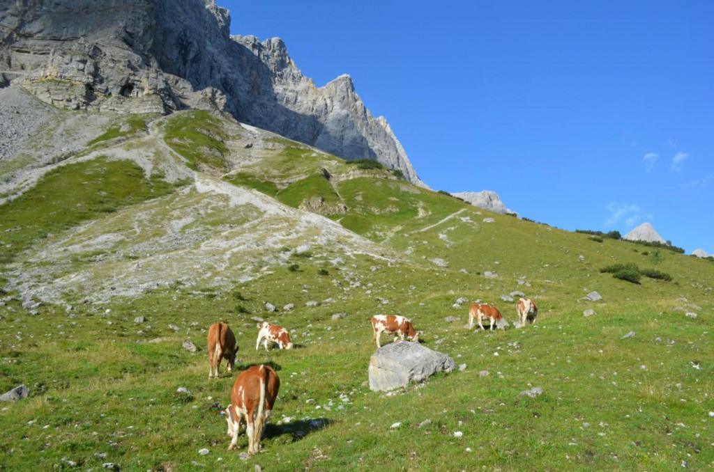 Von der Falkenhütte zum Hochjoch entlang der imposanten Lalider Wände.