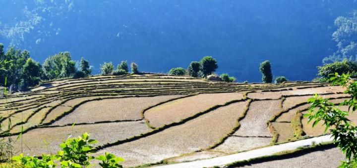 Anbaufelder rund um Annapurna