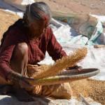 Frau begutachtet Ernte in den Straßen von Bhaktapur