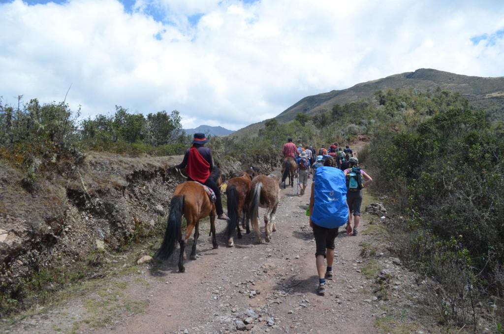 Startschuss Salkantay Trail: Nur 5 Kilo Gepäck nehmen die Lastentiere uns ab.