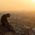 Blick auf Jaipur bei Sonnenuntergang