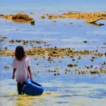 Ebbe im Tauchparadies: Junges Mädchen sammelt Seeigel bei Mabul Island