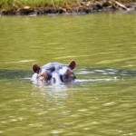 Vorsicht Flusspferde: St. Lucia Südafrika