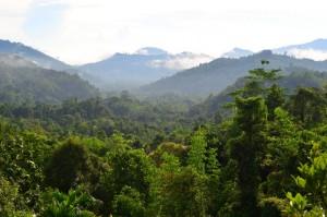Der Kinabalu Nationalpark bietet Wanderfreunden Routen in allen Schwierigkeitsgraden.