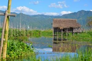 Schwimmende Gärten - typisch für den Inlee See