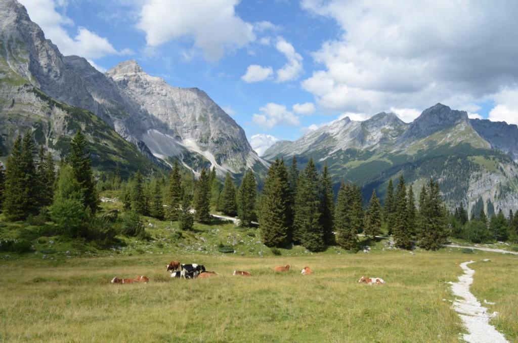 Blick auf das Karwendelgebirge von der Ladizalm.