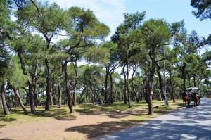 Idyllische Pinienwälder auf Büyükada bei Istanbul.