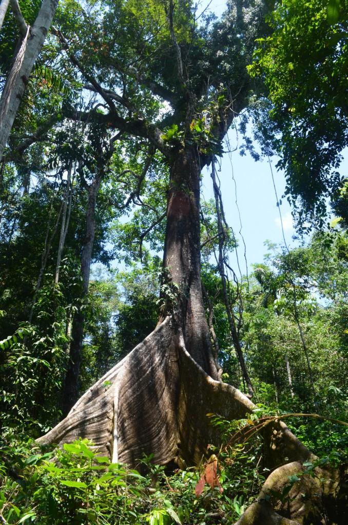 Diese unfassbar hohen Bäume!!!
