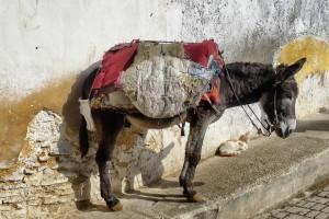 Der Esel ist ein weiterer Verkehrsteilnehmer in Marokko