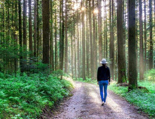 Ein Wochenende im Schwarzwald
