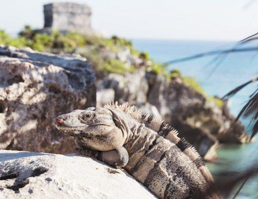 Rundreise durch Mexiko, Guatemala und Belize: Darum solltest du es tun!