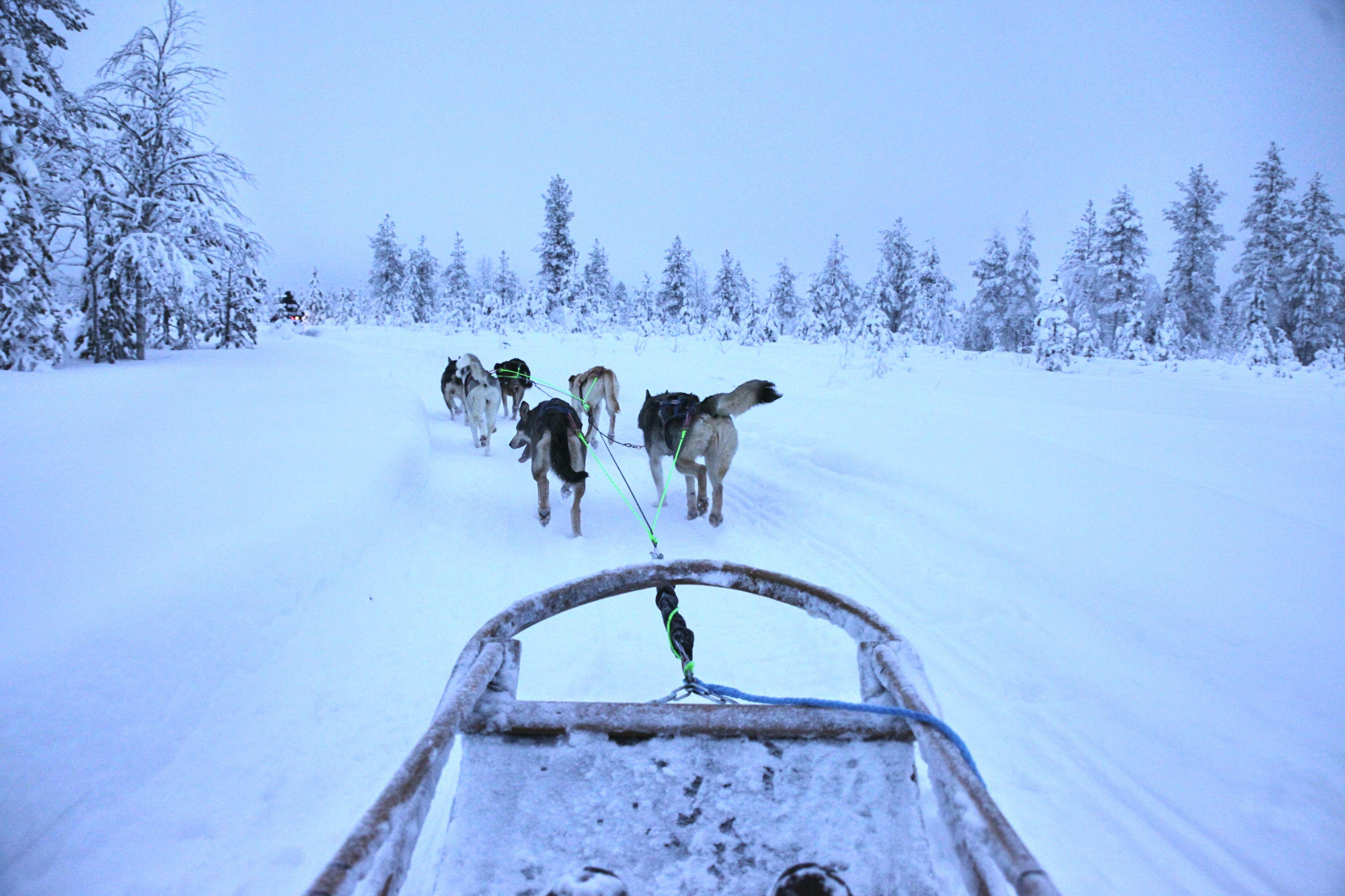 Volle Husky Fahrt voraus - mit Vollgas durch Finnisch Lappland