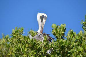 Im Naturreservat Sian Ka'an unweit von Tulum leben Krokodile, Delfine, Schildkröten und zahlreiche Vogelarten geschützt vom Massentourismus.