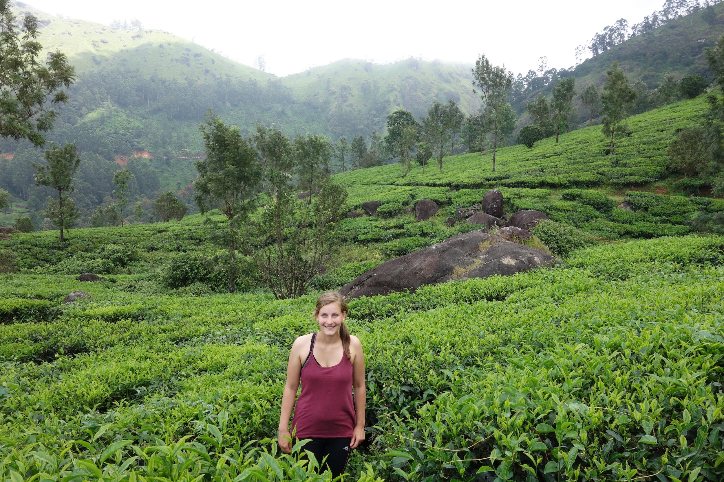 Indien für Aktivreisende: Wenn dir der Himalaya zu viel ist, dann mach doch eine Tageswanderung durch die Teeplantagen.