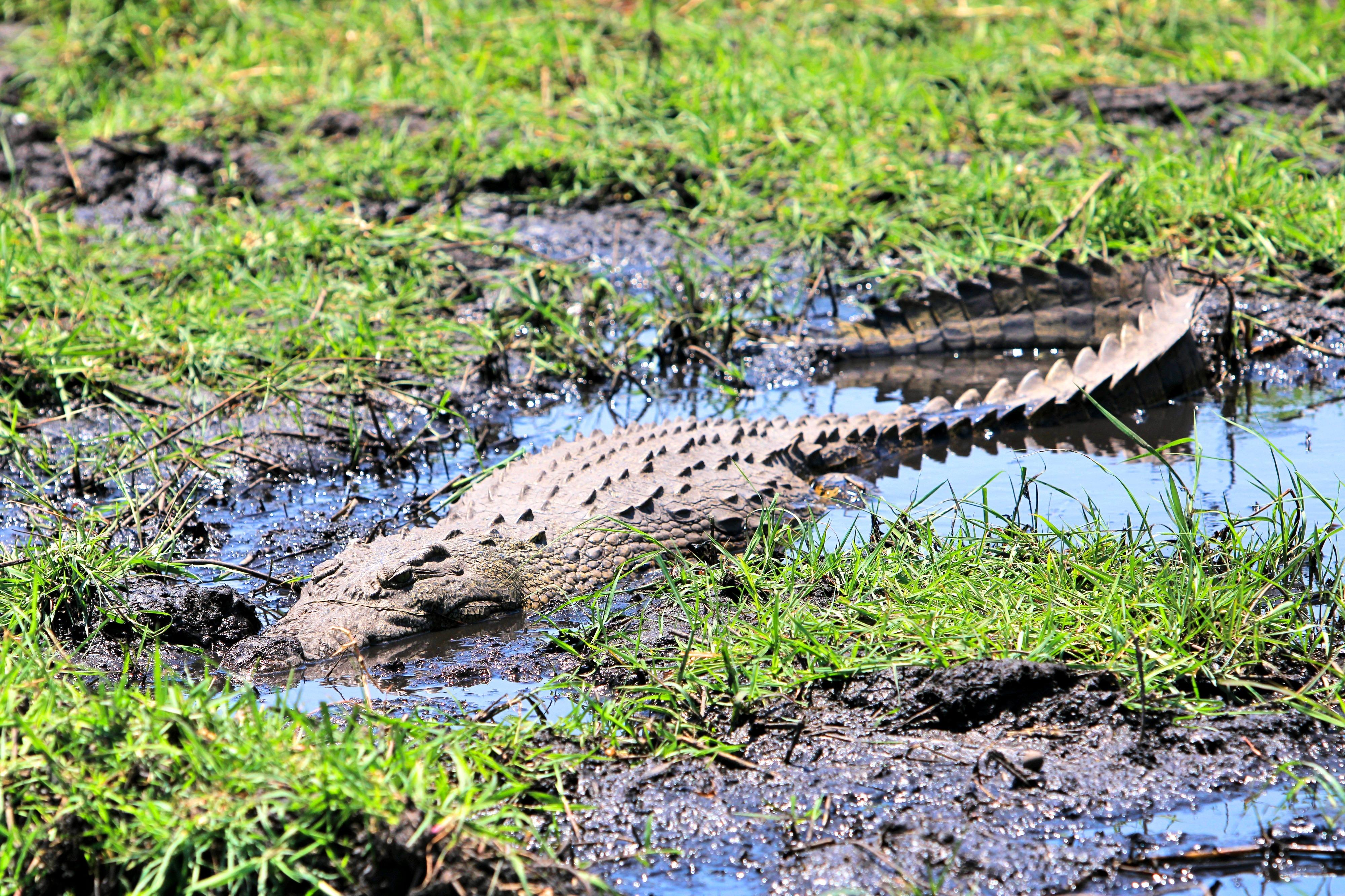 Finger lieber nicht ins Wasser halten - hier gibt es Krokodile.