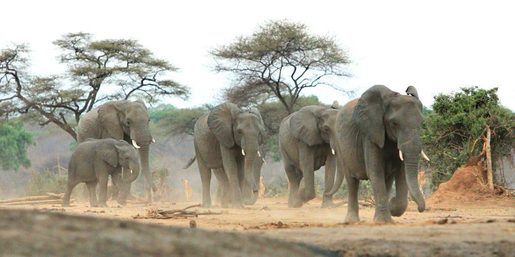 Im Reich der Elefanten: Chobe Nationalpark Botswana | Fernsuchtblog.de