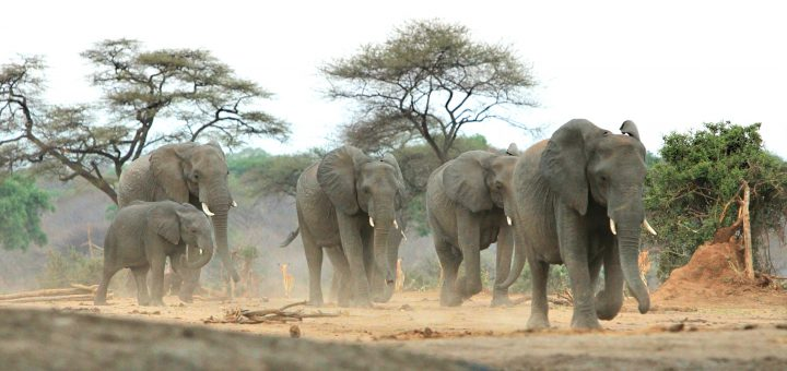 Chobe Nationalpark: Elefanten am Wasserloch